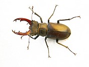 close-up, animals, CLOSE, beetle, Austria, alfred