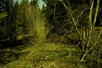 branches, coppice, buschwerk, broken, atmosphere