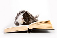 freigestellt, pet, alfred, animal, animals, book