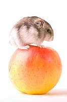 cankerous, animal, apples, apple, animals, alfred