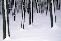 winterwald, austria, blanket of snow, calf, cold, december, drifted