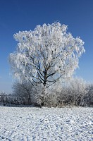 blue, cold, coldness, frost, hoarfrost, huwiler, landscape