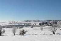 cold, field, forest, FRG, FRG/Bavaria, frosty, hill