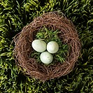Speckled eggs in nest on grass