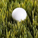 Studio shot of golfball resting in grass (thumbnail)