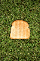 One slice of toast on grass