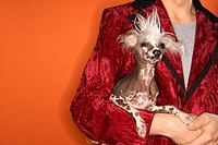 Caucasian mid_adult male wearing velvet jacket and holding Chinese Crested dog