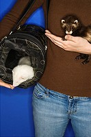 Two ferrets and carrier held by female Caucasian against blue background
