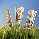 Studio shot of three twenty dollar bill placed in grass