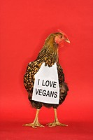 Golden Laced Wyandotte chicken wearing sign reading I love vegans