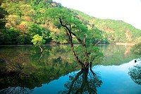 river, scenery, tree, mountain, landscape, lake, nature