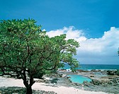 tree, scenery, beach, sea, landscape, summer, nature