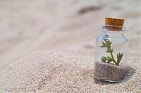 beach, glassbottle, landscape, scenery, sand, shore, bottle