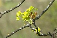 beautiful, berne, blumenpracht, blurred, buds, burgdorf, chlorophyll