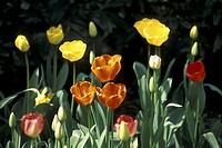 blossom, Bernhard, blooms, bloom, black, abloom
