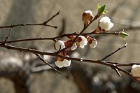 beautiful, berne, blumenpracht, blurred, branch, branches, brown