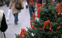 stephansplatz, advent, austria, calf, christmas, Christmas, christmas tree
