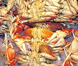 boiled, claws, crabs, display, food, fresh, gumbo