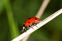 animals, CLOSE, beetle, austria, alfred