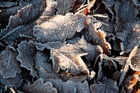 vorbei, reif, Austria, cold, contrast, eiskristalle, frosty