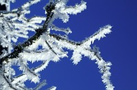 Blue, bough, branch, CLOSE, close-up, cold, crystal (thumbnail)