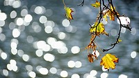 glowing, autumn, glitter, calf, autumn_like, leaf, austria