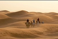dubai, desert, travel, camel, people, walking