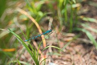 anthropods, bug, arthropod, animal, dragonfly, anthropoda, insect