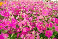 Blossom, flower, bloom, flowers, plants, flower garden, plant (thumbnail)