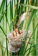 chick, nature, bird`s nest, grass, scene, young, landscape