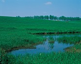 tree, landscape, scenery, swamp, field