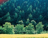 field, wood, landscape, scenery, tree, forest