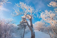 scenery, snow, landscape, winter, mountain, scene, tree