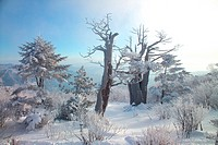 freezing, snow, cold, winter, mountain, freeze, tree