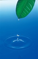 natural phenomenon, nature, water, waterdrop, leaf