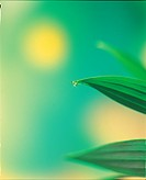 leaf, waterdrop, plants, plant, dew, water