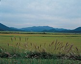 field, sky, landscape, scenery, reed, mountain