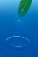 droplet, natural world, water drop, ripple, surface, leaf