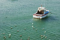 Flock of gulls resting in sea, small boat anchored nearby