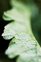 Leaf, extreme close_up