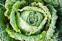 Savoy cabbage, extreme close_up