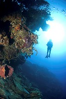 Scuba Diver over coral and sponge reef, Maria La Gorda, Caribbean (thumbnail)
