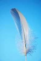 Feather (thumbnail)