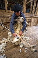 Sheep shearer, Cerro Negro ranch, Chilean Patagonia, Chile (March 2009)