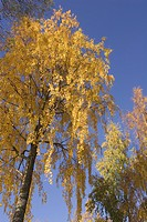 Branch, Day, Generic Location, Golden, Leaves (thumbnail)