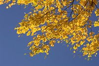 Branch, Clear Sky, Day, Generic Location, Golden