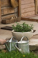 Water, Sprinkler, Watering Can, Front Or Back Yard, Gardening