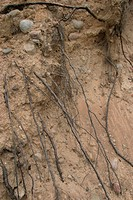 embedded, spreading, roots, root, pattern, background