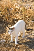 Cat, Day, Domestic Animals, Domestic Cat, Dry