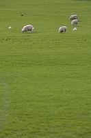 Day, Field, Full Frame, Grass, Grazing